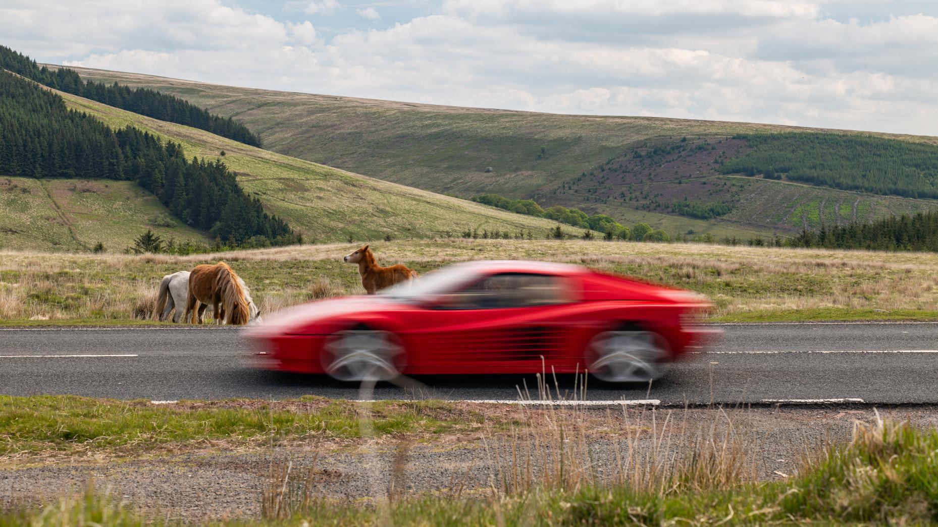 Ferrari 512 heuvels paarden