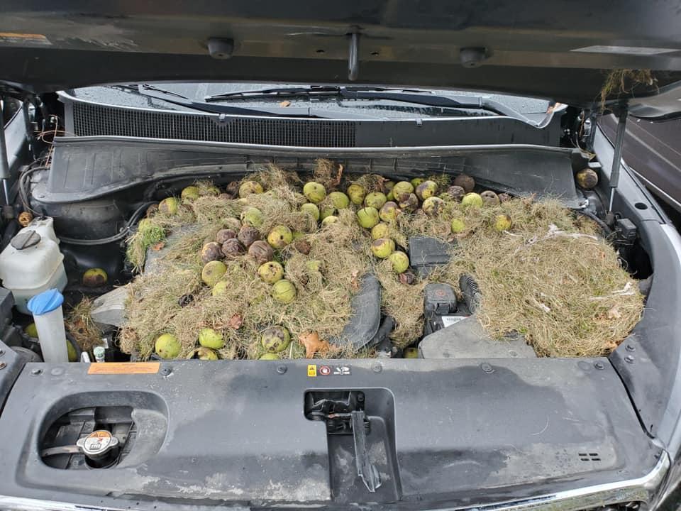 Eekhoorns gebruikten nieuwe auto als opslag