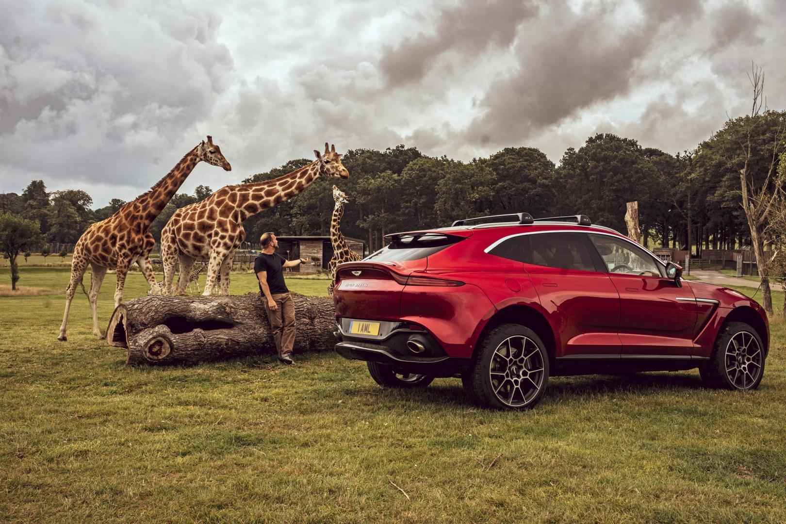 Aston Martin DBX 2020 met giraffen