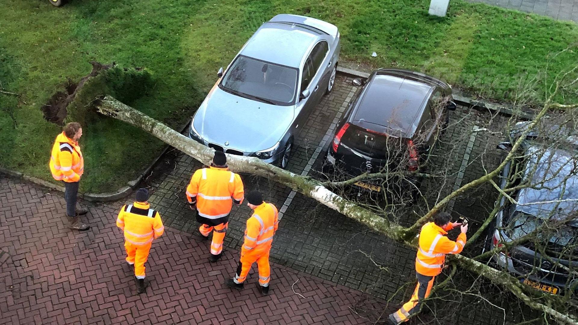BMW 5-serie omgewaaide boom