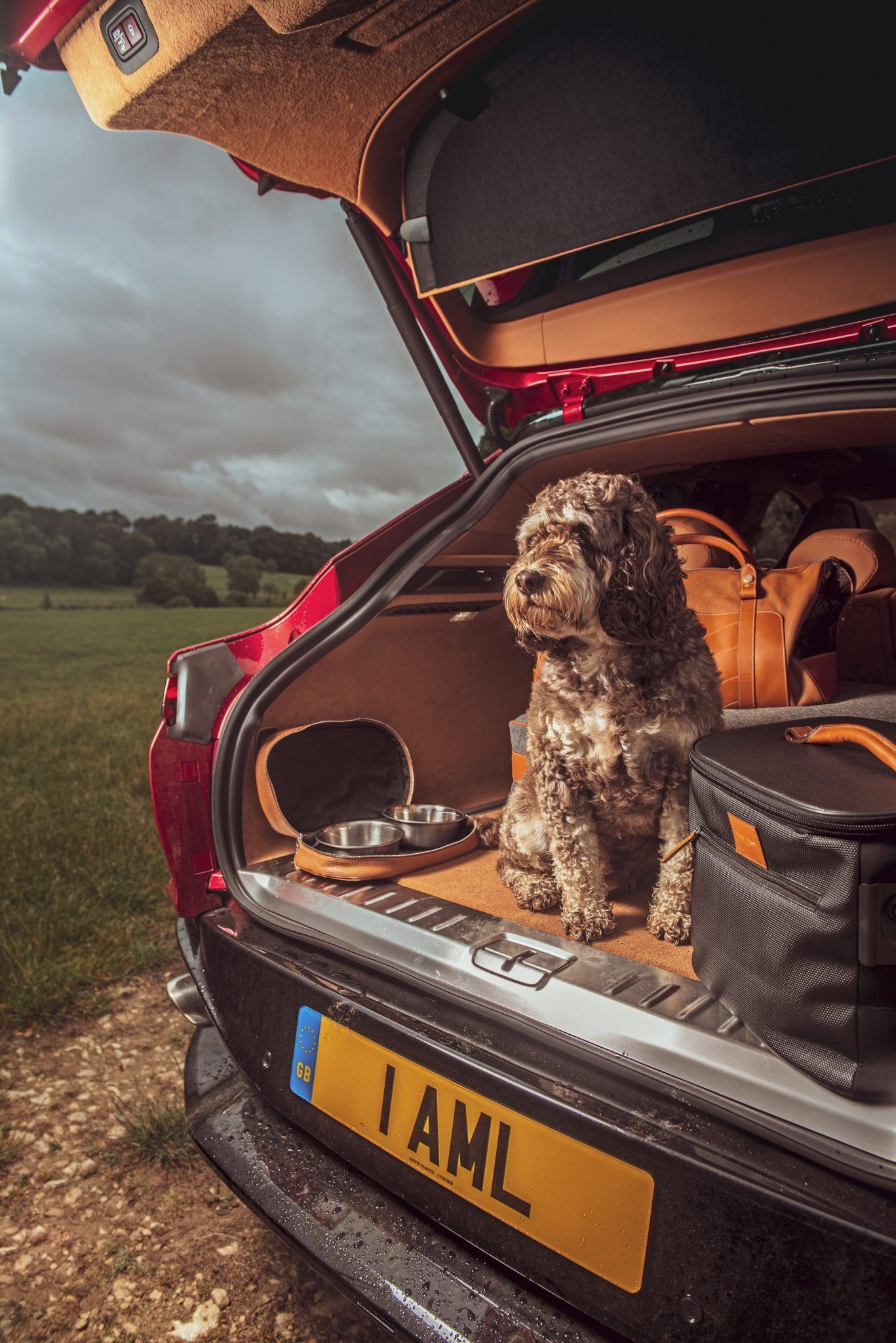 Kofferbank met poedel (hond) Aston Martin DBX 2020