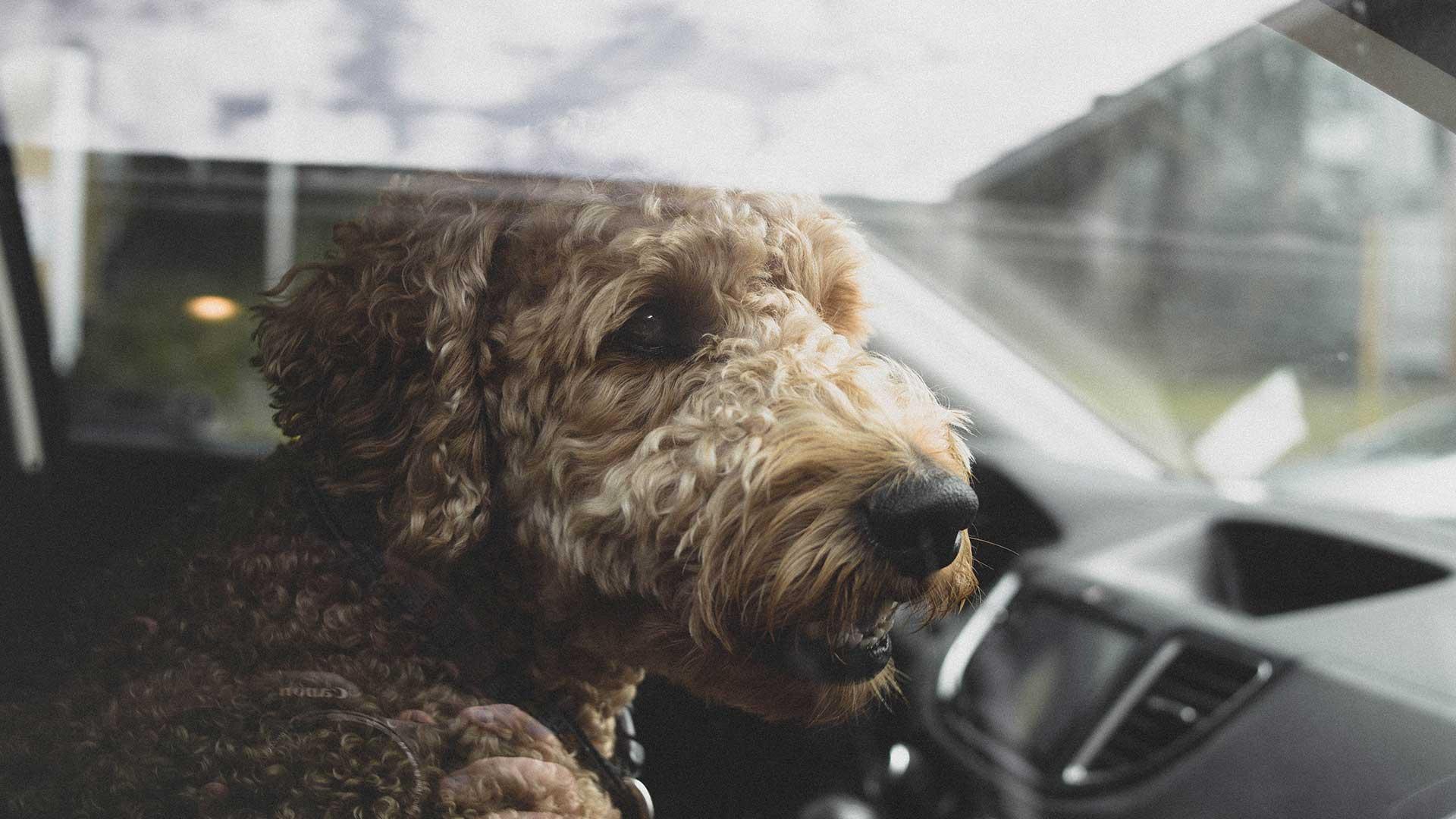 Wat doe je als je een hond in een hete auto ziet?