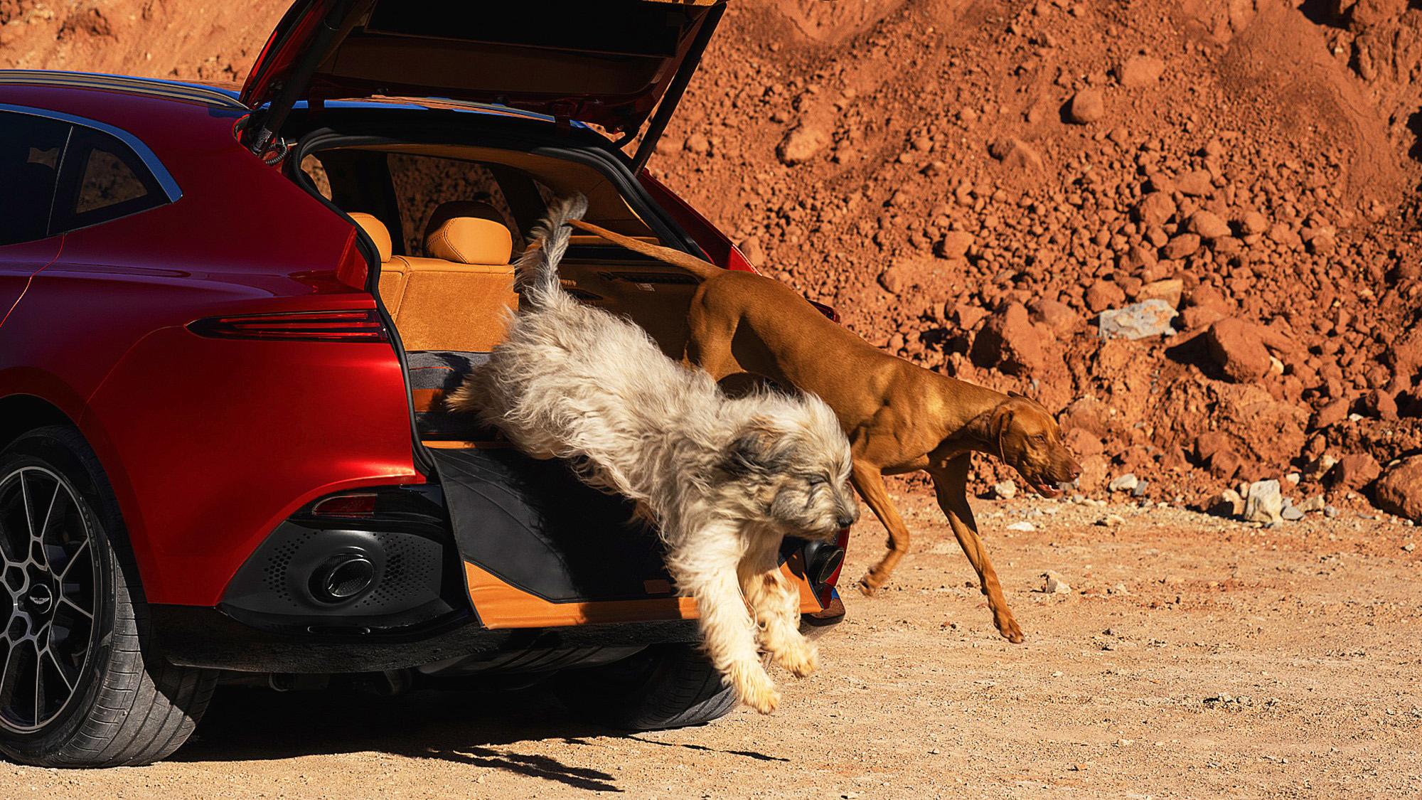 De beste auto's voor honden