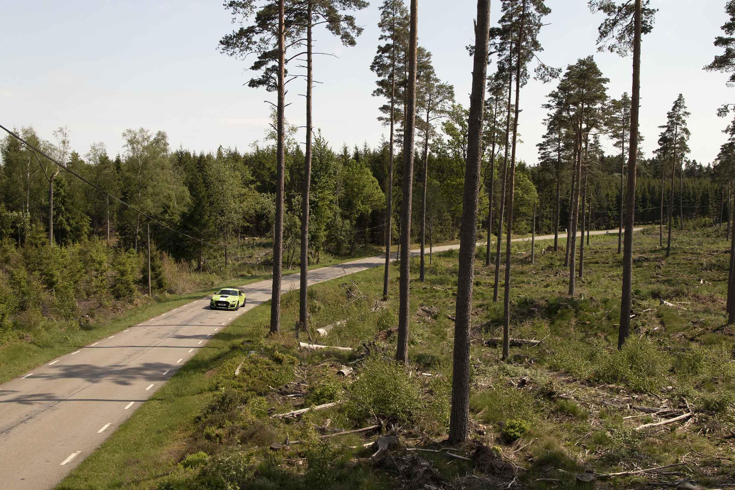 Ford Mustang Shelby GT500 rijdt tussen de bomen