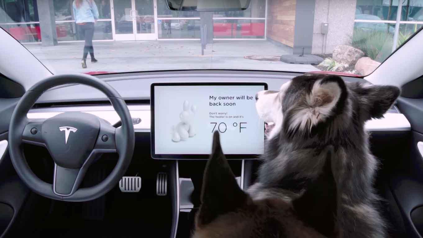 Tesla Model 3 dog mode hond